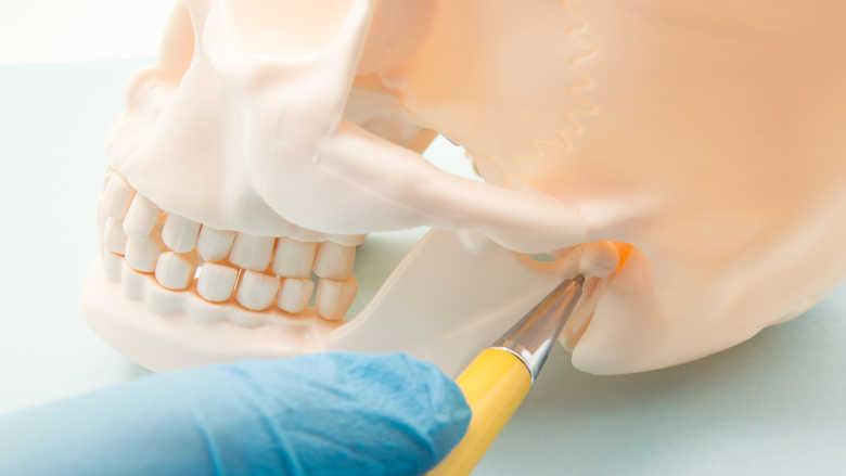 Vědci vyvinuli model pro automatickou lokalizaci mandibulárních kanálků