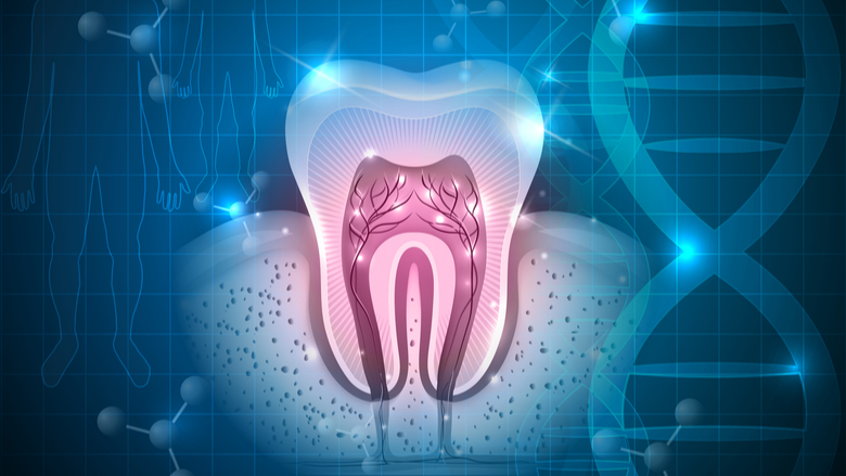 New research may expedite regenerative dentistry