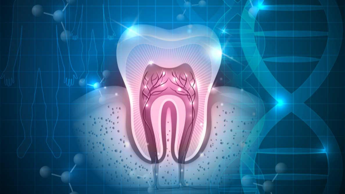 Новое исследование может ускорить развитие регенеративной стоматологии
