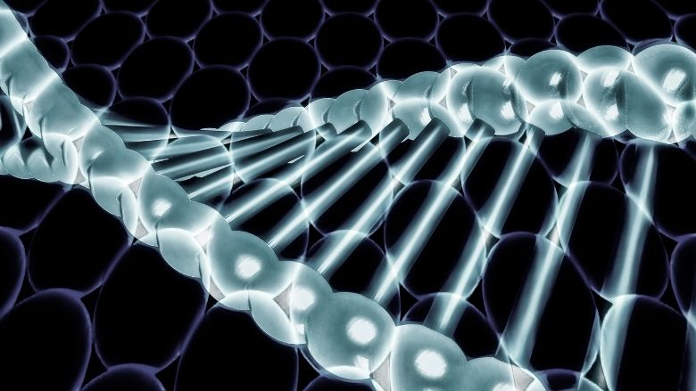 Human genome editing for public health – WHO recommendations